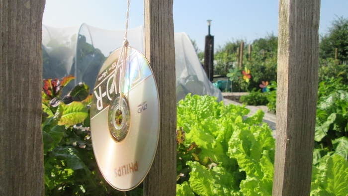 CD's all around the vegetable garden