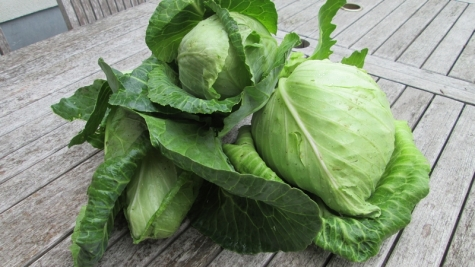 Ox heart cabbage