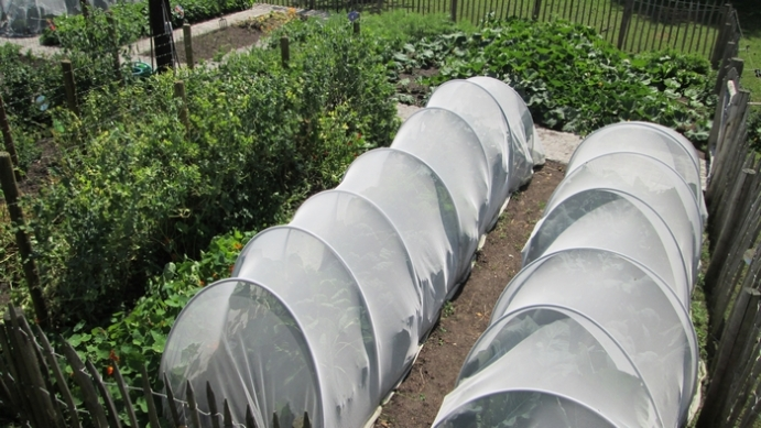 Insect net cabbages - vegetable garden