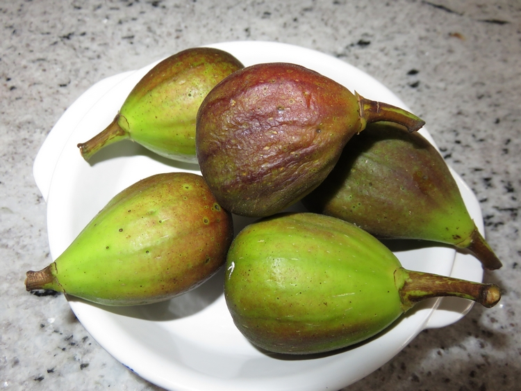 some of the figs