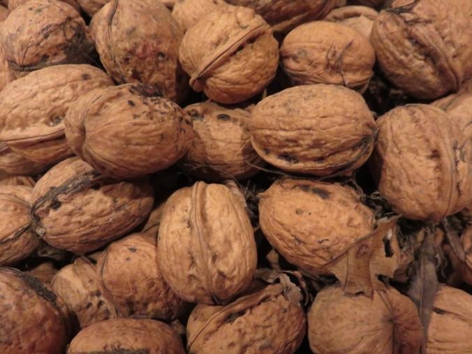 walnoten uit onze tuin