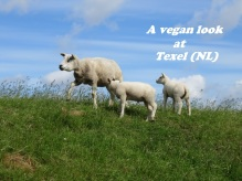 A vegan look at Texel