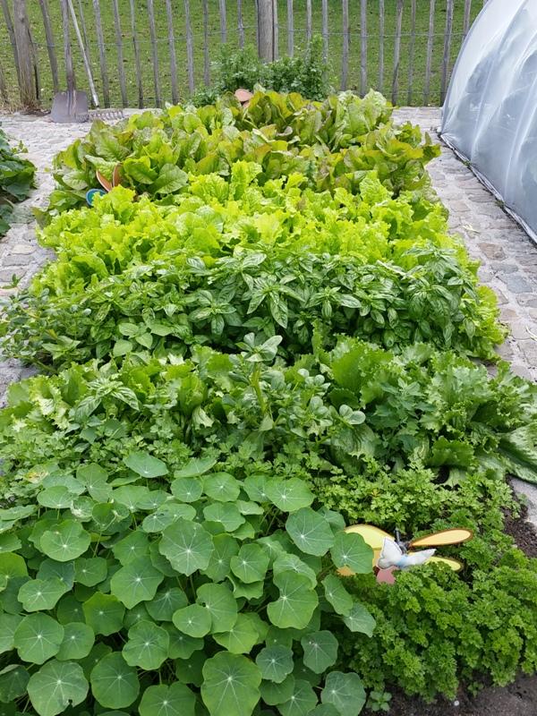way too much leafy greens!