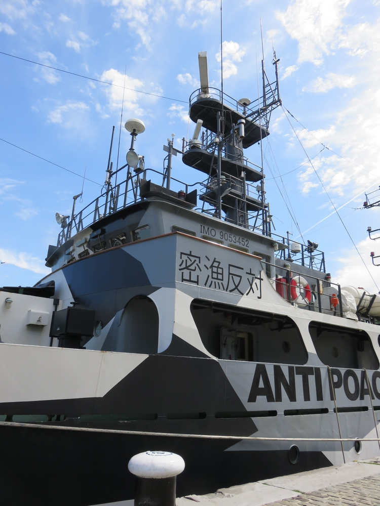 The Sam Simon in Anwterp