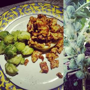 Homegrown Brussels sprouts, mashed potatos (also homegrown) and baked tempeh (I wish I could say homegrown, helas, maybe I'll try growing soy beans next season! ) Why are they called ⏩Brussels sprouts⏪ in English? We just call them ⏩spruiten⏪! 😁