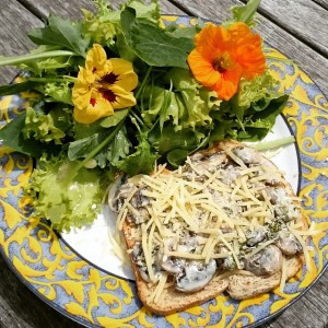 Toast champignons with vegan cheese and mixed salad straight from the garden!