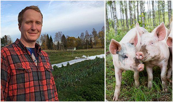 photo JOHNER, via https://www.aftonbladet.se/debatt/a/1Qw6K/jag-gick-fran-att-vara-grisbonde--till-vegan