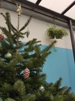 Christmas tree, le Botaniste, Ghent